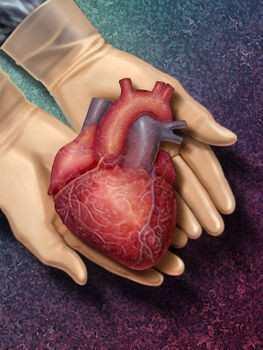Влияние алкоголя на сердце человека